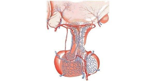 Sistema Porta Hipofisiario