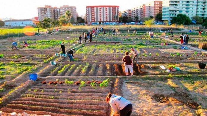 Agricultura Urbana y Periurbana
