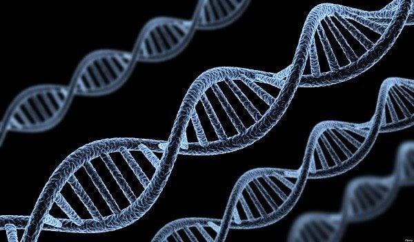 genes ancestrales - Eva mitocondrial