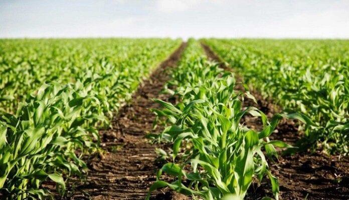 Proyecto Transición de la Agricultura