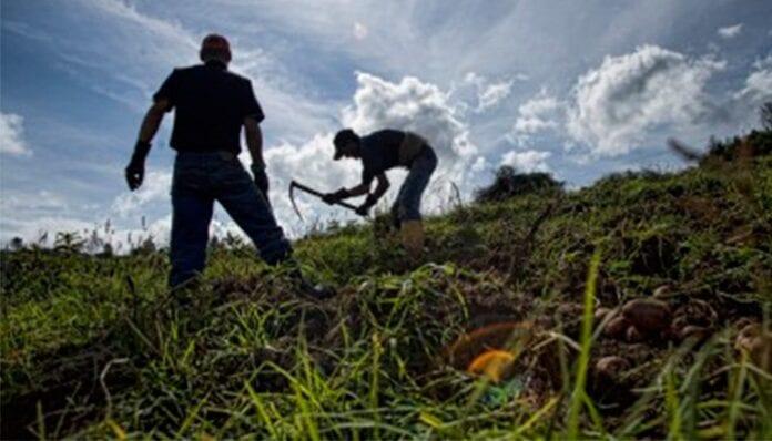 aliviar a productores del campo