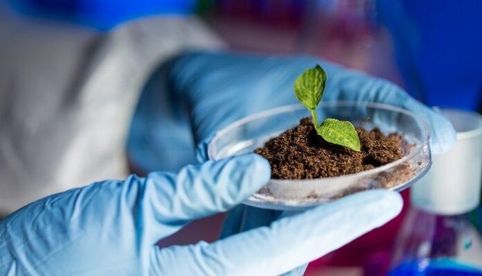 biotecnologías agrícolas
