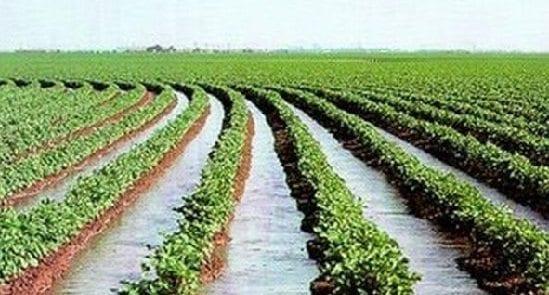 Tibaitatá - Conservación de suelos