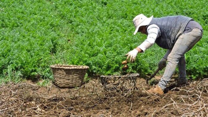 cooperación agrícola