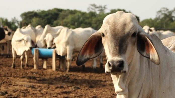 exportación de ganado a Jordania