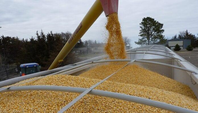 incentivo al almacenamiento de maíz