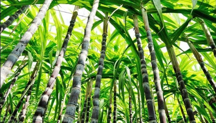 planta de bioetanol