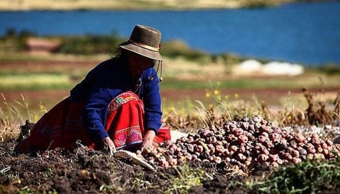 Programa Agro Ingreso Seguro