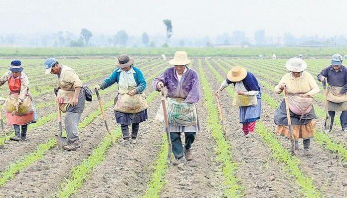 tasa de ocupación del sector rural