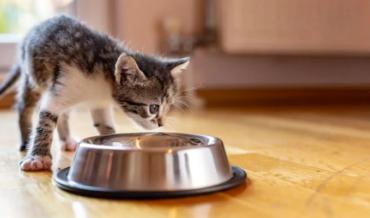 Cómo alimentar gatos