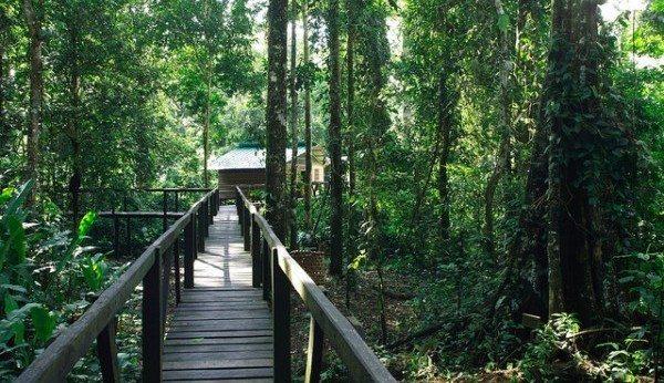 isla-de-los-monos-colombia