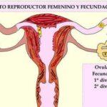 Ovulación y Fecundación - Planificación Familiar