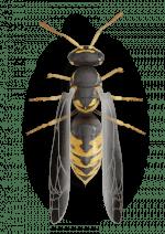 Véspulas - Alergia a Picaduras