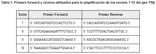 Primers forward amplificación de los exones 7-10 del gen TRβ