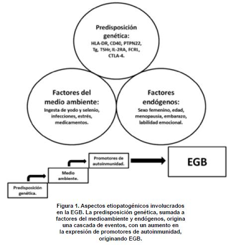 Aspectos etiopatogénicos en la EGB