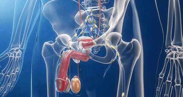 la verdad de la naturaleza para la próstata