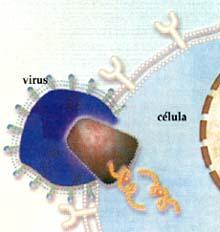 EL VIH Después del contacto inicial