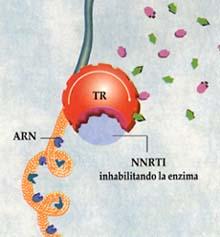 Sitio de acción de los NNRTI