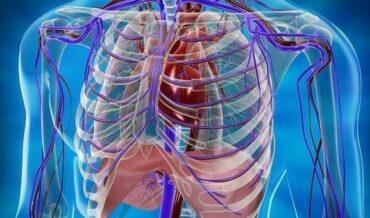 Trauma Vascular Periférico