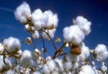 Cadena Productiva de Algodón, Textil, Confecciones