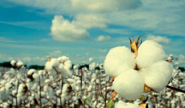 Cadena Productiva de Algodón, Textil, Confecciones en Colombia
