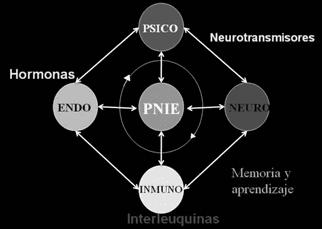Psicoinmunoendocrinología