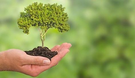 Regulación de la Reforestación Comercial
