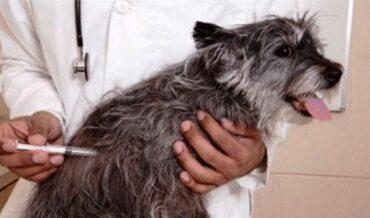 Prevención de agresion de animal con rabia