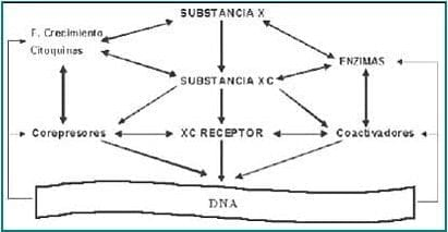 Mecanismos propuestos de acción tejido específica de la tibolona