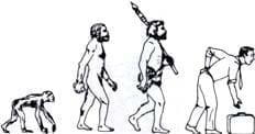 Evolución filogénica del primate al homo sapiens