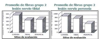 Número total de fibras en lesión de nervio tibial y perioneal