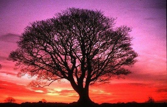 El Gran Árbol de la Vida