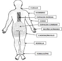 Segmentos anatómicos para ubicación del dolor