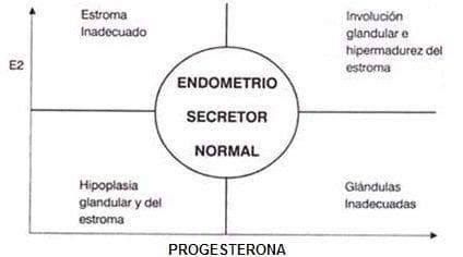 Efectos de las hormonas sobre el endometrio