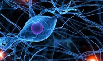 Menopausia y sistema nervioso