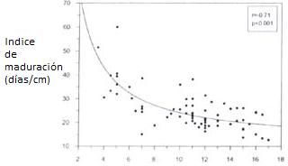 Relación entre índice de maduración y elongación