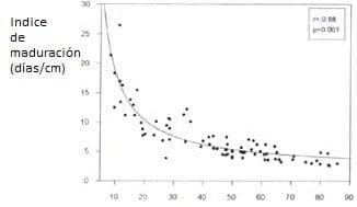 Relación entre índice de maduración y porcentaje de elongación