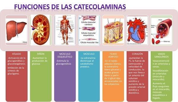 SÍNTESIS Y METABOLISMO DE LAS CATECOLAMINAS, FISIOLOGÍA..