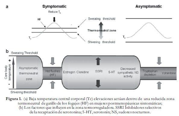Concentraciones periféricas de estrógenos - Menopausia