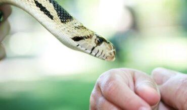 Mordedura de Serpiente en Niños
