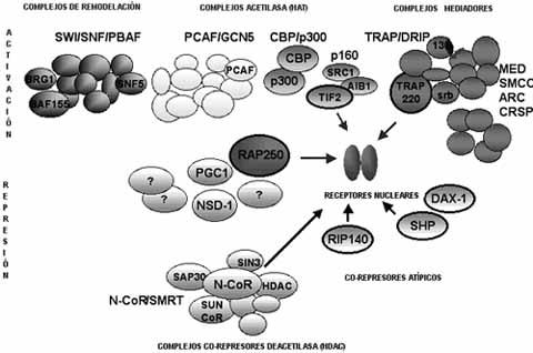 Co-activadores y co-represores de la trascripción celular