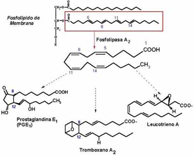 Metabolismo del Araquidonato