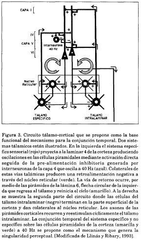 Circuito tálamo cortical