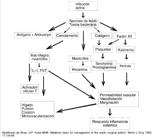 Interrelación entre el sistema neuroendocrino y las citokinas