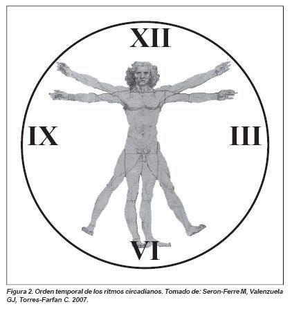 Orden temporal de los ritmos Circadianos