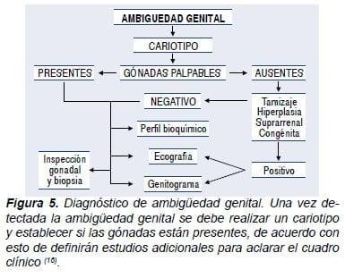 Diagnostico de ambiguedad genital