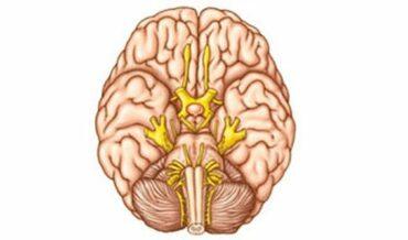 Nervios craneanos