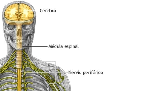 OPERACIONES PARA LESIONES DE LOS NERVIOS PERIFÉRICOS, NEUROCIRUGÍA