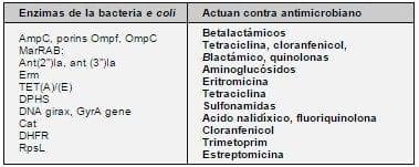 Enzimas de la bacteria Escherichia Coli