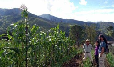 reactivación del sector agropecuario